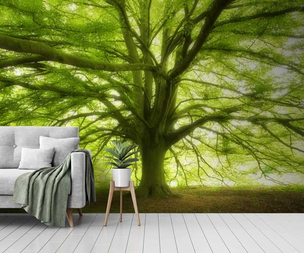 Wall Mural Collection